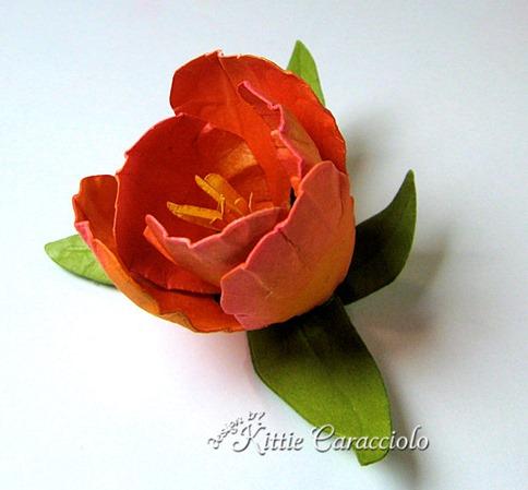 KC Tulip 3