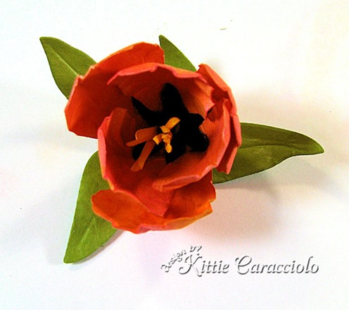 KC Tulip 4