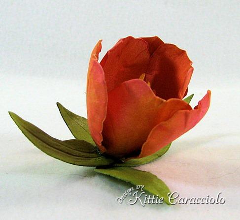 KC Tulip 5