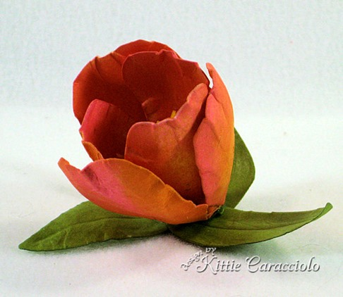 KC Tulip 6