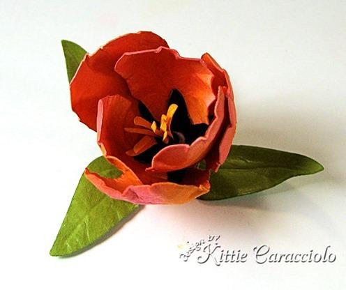 KC Tulip 1_thumb[4]