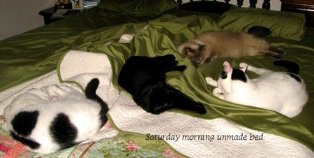 Sat Morning Bed 05 09